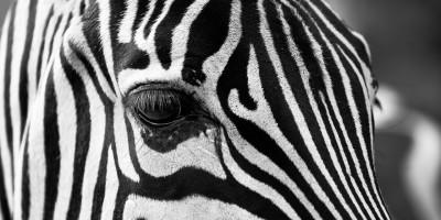 Sowohl Texturen als auch Kontraste werden durch Schwarz-Weiß-Fotografie unterstrichen